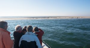Seals sightseeing during the crossing